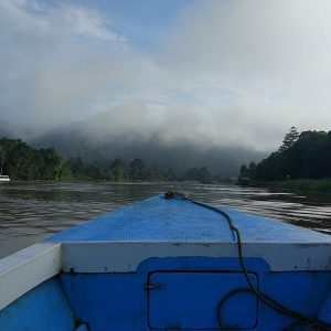 Vue de la rivière Kinabatangan depuis l'avant d'une barque à moteur, Malaisie