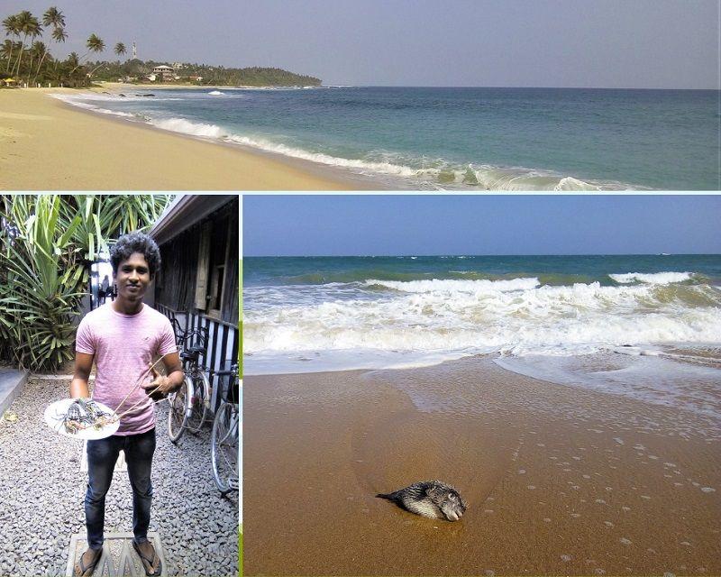Photos de plages et de poissons au Sri Lanka