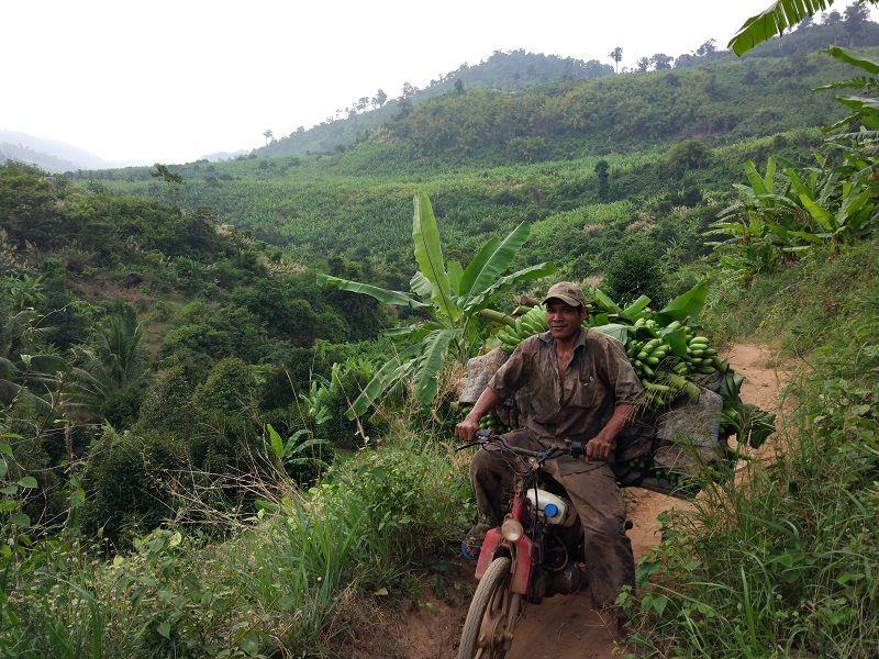 Ouvrier agricole chargé de bananes descendant la colline à moto, Kampot, Cambodge