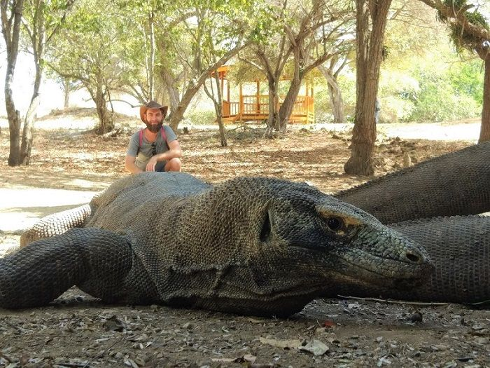 Gros plan su un dragon de Komodo avec moi en arrière plan, île de Rinca, Indonésie