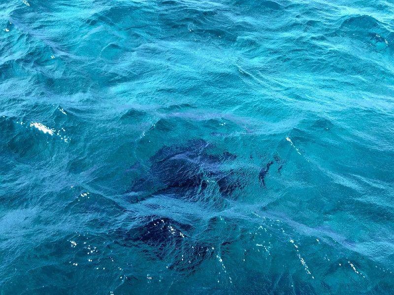 Ombre d'une raie manta sous l'eau vue depuis le bateau