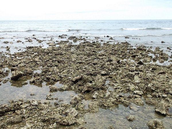 Coraux morts sur une plage