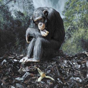 Chimpanzé triste assis sur un tas d'ordures ménagères