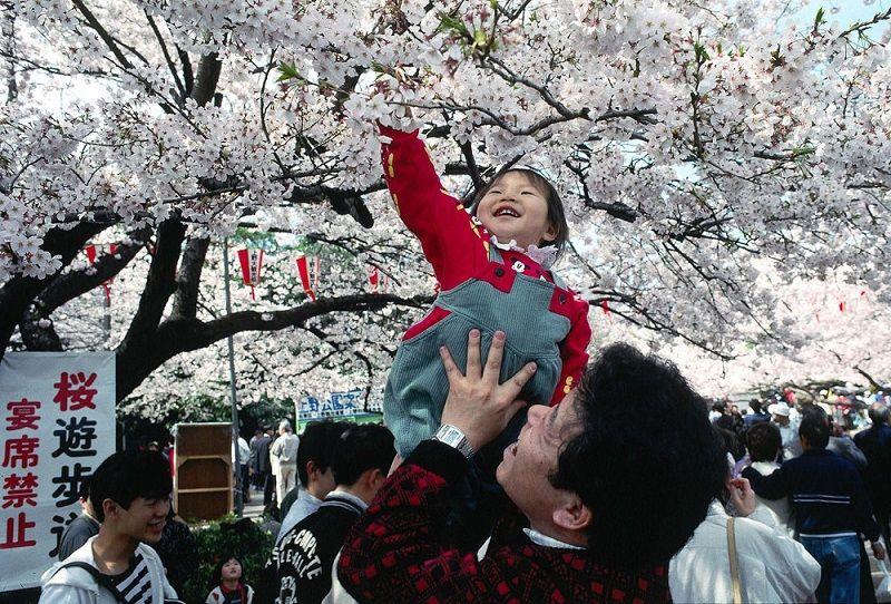 Enfant dans le parc Hanami au Japon