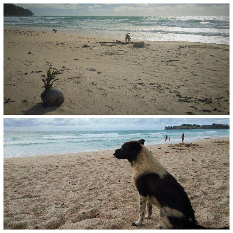 chiens sur plage déserte au Tip of Borneo